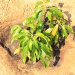 Shannon Investment cc donates fruit trees to Rundu Campus